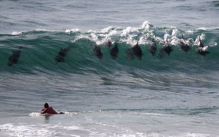 Dolphins surf rolling waves, Byron Bay, New South Wales, Australia by Cliff Russell
