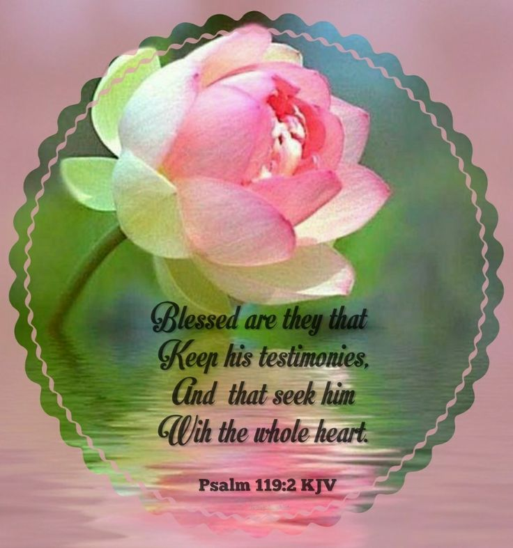 Psalm 119:2 KJV Blessed are they that keep his testimonies, and that seek him with the whole heart.