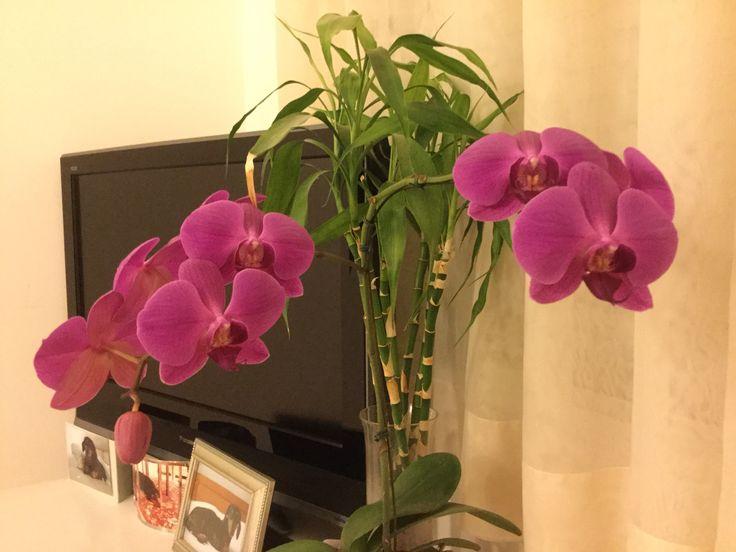 Minhas orquídeas, todas floridas! Adoro!