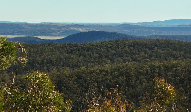Yambira Mountain, Conimbla National Park, Cowra