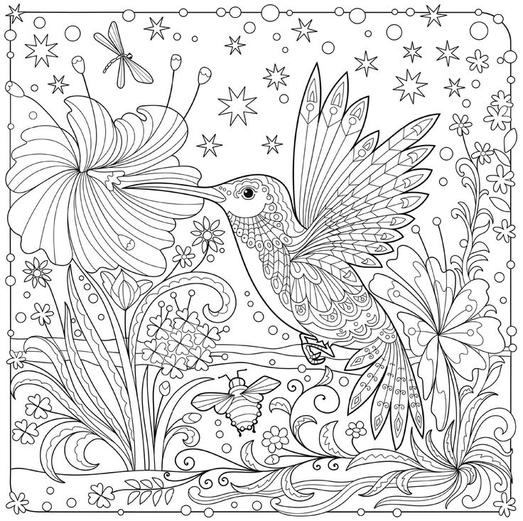 Hummingbird Animal Coloring Pages. hummingbird colouring page 782 best Animal Coloring Pages for Adults images on Pinterest