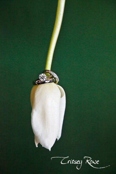 wedding bands, portrait