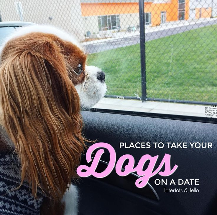 "Puppaccino Playdates - places to take your dogs on a ""date"". List of pet-friendly restaurants that welcome your furry friends."