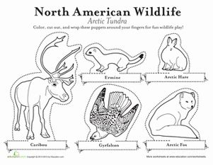 Arctic Animals Finger Puppets Crafts Animals And Earth Arctic Coloring Page