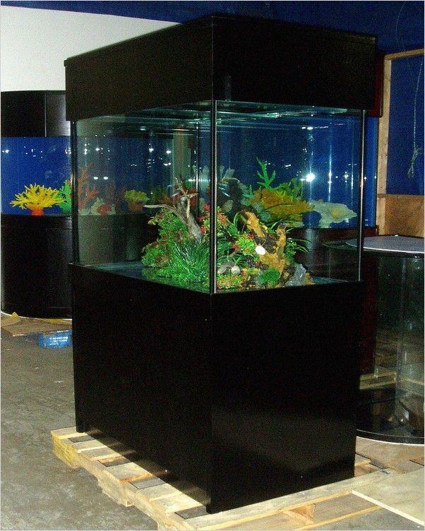 Big Fish Tank In 2020 Big Fish Tanks Fish Tank Plants Fish Tank Design