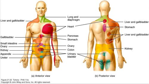 anatomy of the human body system | growablegreetings.com ...