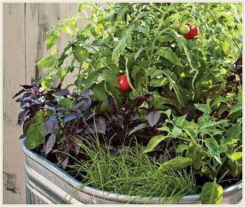 トマトと相性のいいハーブや野菜には、バジルのほかにもタイム、マリーゴールド、しそ、セージ、ローズマリー、パセリ、コリアンダー、チャイブ、にらなどがあるそうです。