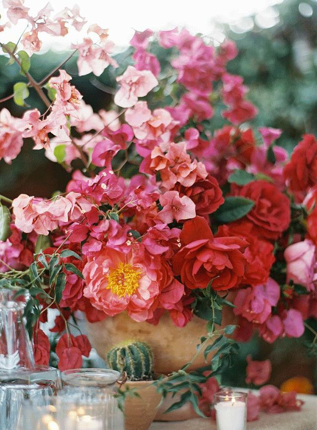 Honey of a Thousand Flowers - Journal Wild bougainvillea arrangement, Photo by Tec Petaja