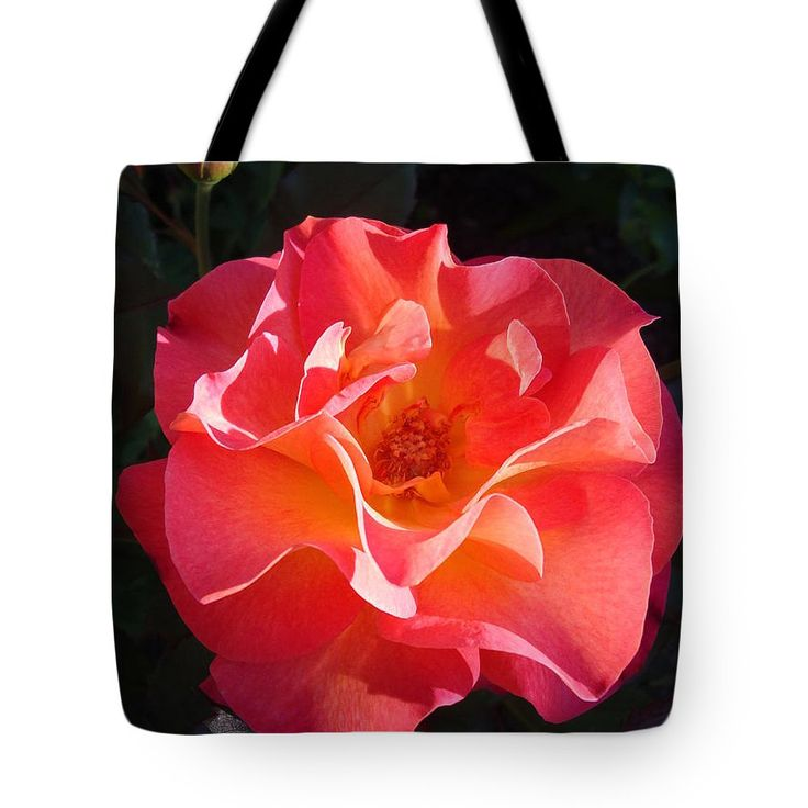 Rose Tote Bag featuring the photograph Rose Mardi Gras by Lyssjart Sj