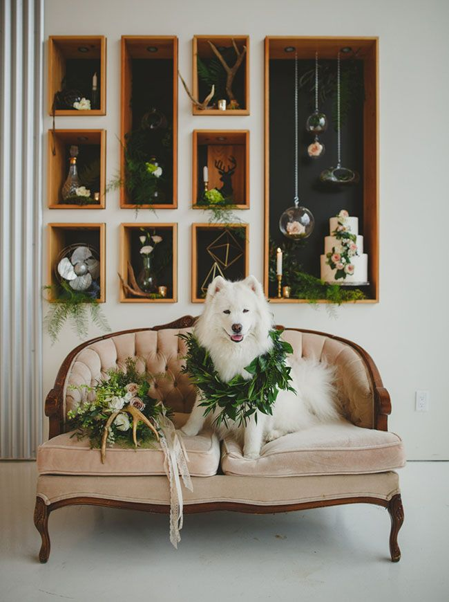puppy with garland