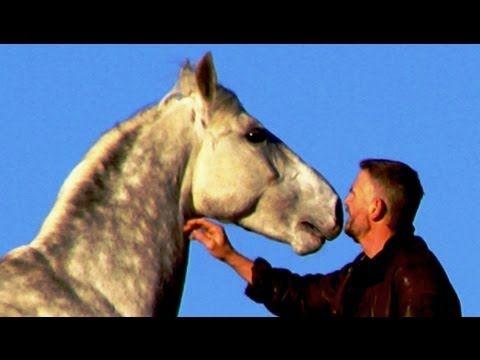 Hempfling - The Horse's Freedom - Bond, Expression, Happiness - YouTube