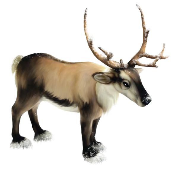 Reindeer PNG Clipart