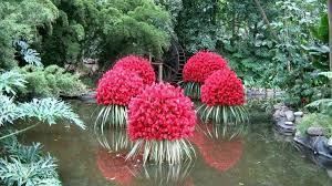 Resultado de imagen para plantas acuaticas flotantes