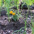 Prevenir las plagas en primavera | ECOagricultor