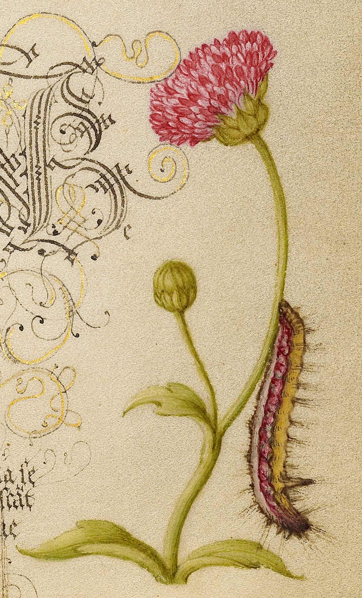 Joris Hoefnagel, Georg Bocskay, 1591-96, script 1561-62