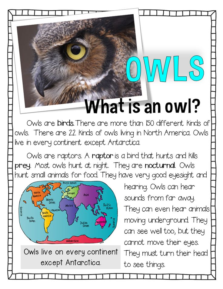 Owl unit! Information on owls, vocabulary, compare and contrast, researching owls, many great activities for your students.
