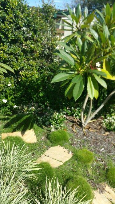 Sandstone steppers add interest to garden