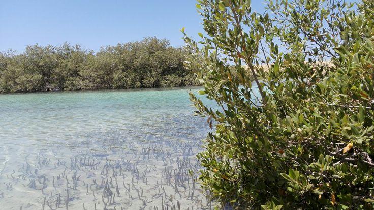 mangroves in ras mohamed