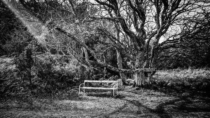 Lonely bench - BW by Ernst Erdmann on 500px