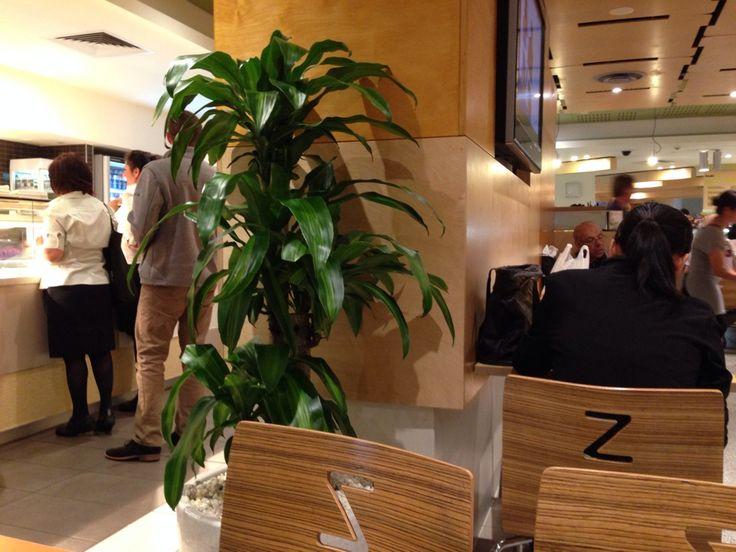 Zouki Café in Parkville, VIC