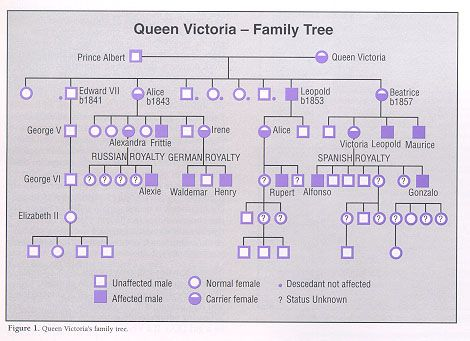 british royal family tree royal family trees queen  did you know that hemophilia is also called the royal disease queen victoria of england
