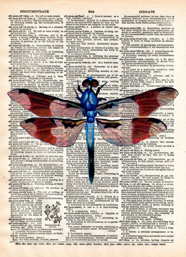 Dragonfly art, illustration 1800's, dictionary page art
