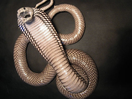 Taxidermy taxidermie tassidermia snake cobra