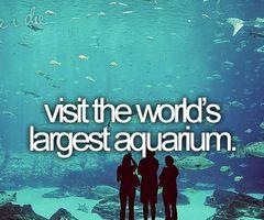 Bucket List -- visit the world's largest aquarium: Keep Swim, Buckets Lists, World Largest, The Ocean, Before I Die, Largest Aquarium, Georgia Aquarium, Sharks, The World