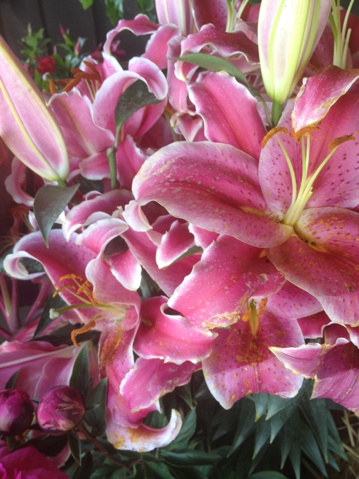oriental lily planting instructions