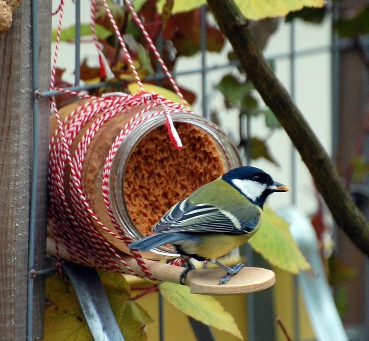 Snel en makkelijk meer vogels in de tuin? Koop een pot pindakaas met stukjes noot. Bevestig er met touw of tape een pollepel of takje aan en hang in de tuin.