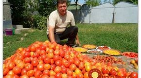 Magický balzam pre rast paradajok od záhradníka Vladimíra Zelenku!