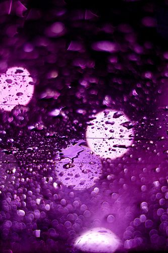 Purple rain | Purple rain | Flickr - Photo Sharing!