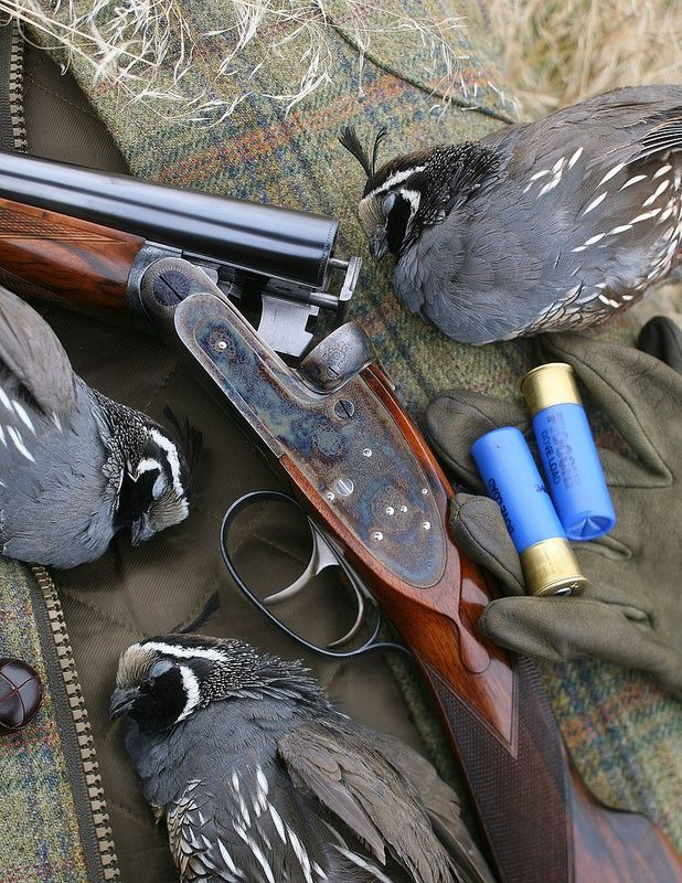 19 best Bird Hunting images on Pinterest | Hunting dogs, Pheasant ...