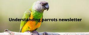 Understanding parrots website
