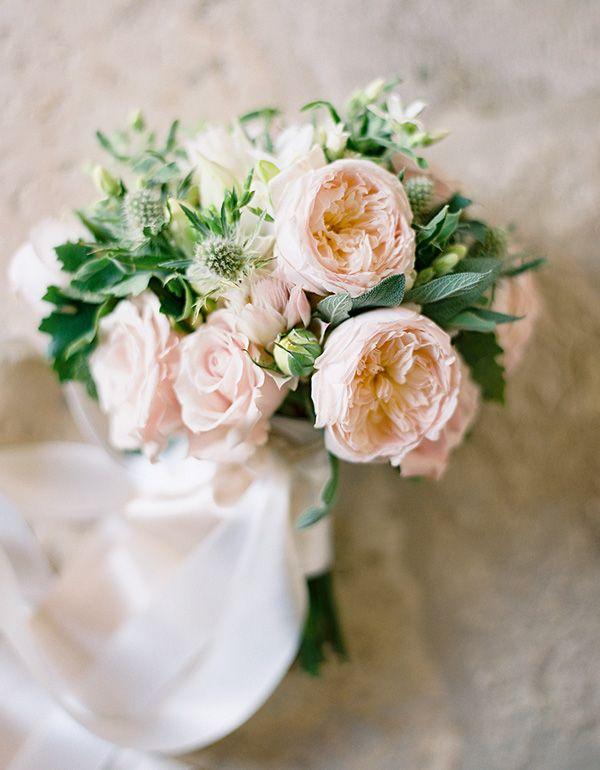 blush garden rose google search