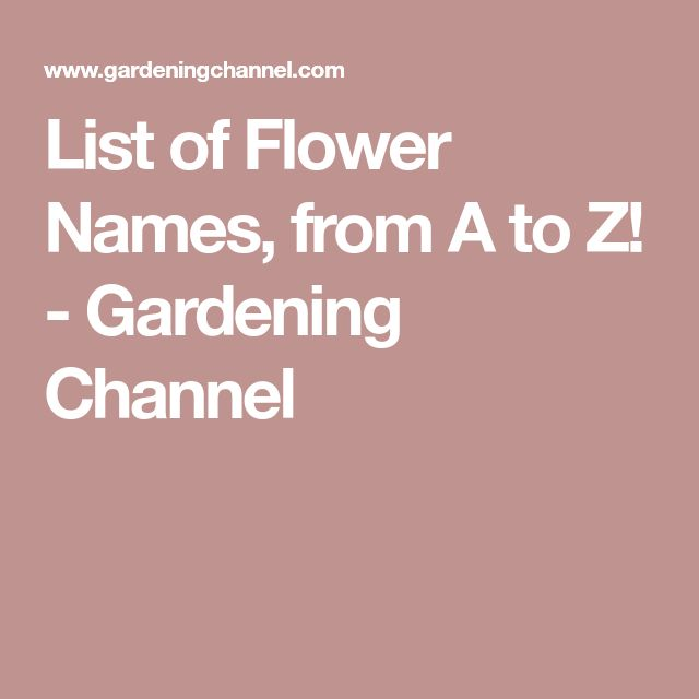 List of Flower Names, from A to Z! - Gardening Channel