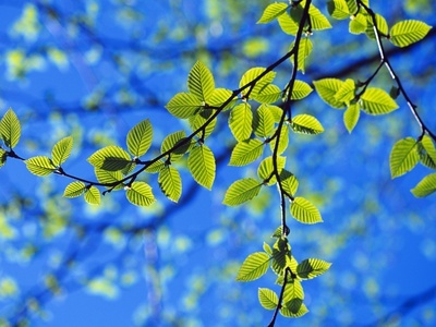 Spring Leaves, Irving Nature Park, Saint John, New Brunswick, Canada Photographic Print