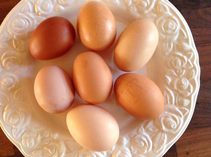 Mine høns lægger de fineste æg i alle nuancer.