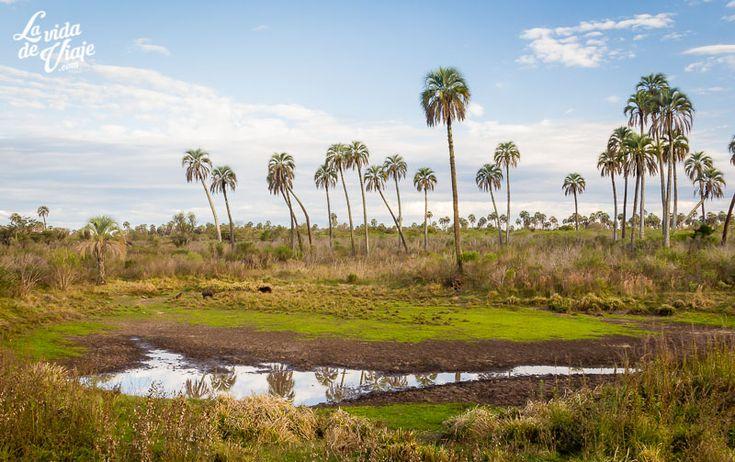 El Palmar (Argentina): jugando con los sentidos, una propuesta de La Vida de Viaje