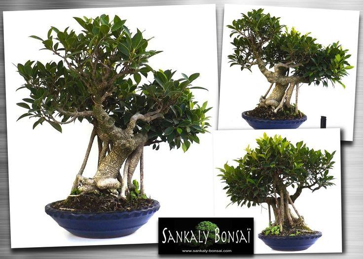 222 besten Bonsai Bilder auf Pinterest | Bonsai, Blume und Budget