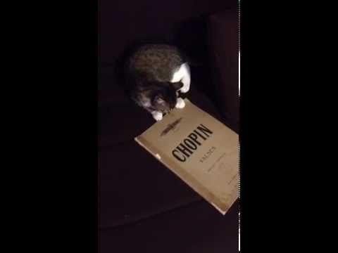 yÖkÔ le chat pr ouvrir...