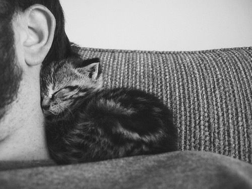 little tiny kitten snuggles