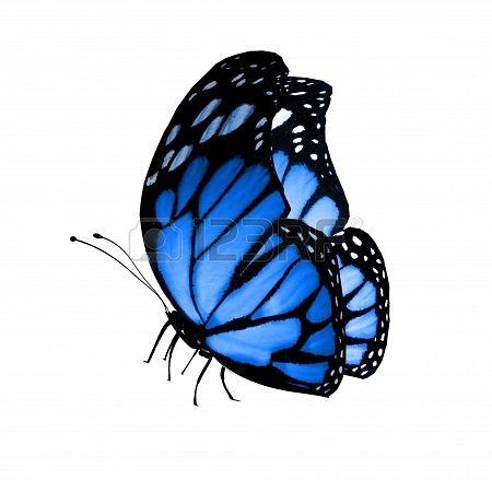 Blauwe vlinder, geïsoleerd op wit Stockfoto - 15363842