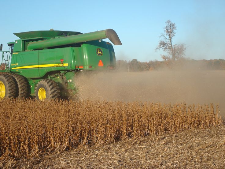 Never stand behind a combine in the soybean field!!!
