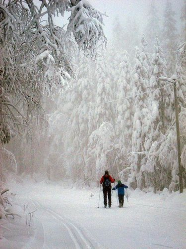 Cross-country skiing in Oslo, Norway Re-pinned by #Europass