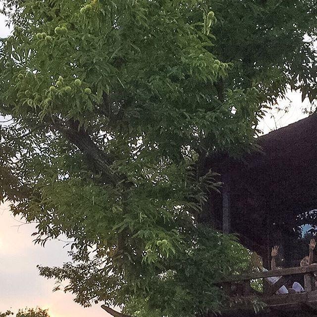 【komi_taro】さんのInstagramをピンしています。 《#treehouse #nature #wild #followme #大自然 #森 #冒険 #フォレストアドベンチャー #リフレッシュ #refreshing #like4like #likeforfollow #follow4follow  #建築 法を無視した #ツリーハウス で #二泊三日 の #サバイバル  #firekeepers #一眼レフ #saysomething #adventure #栃木 #黒磯 #おだぎりがーでん》