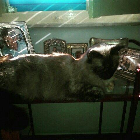 Una delle mie tre gatte femmine...!  ( più altri due gatti maschi...! ;) )