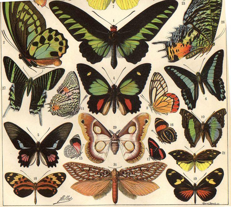 illustration from beginning 20 century Laroux encyclopedia