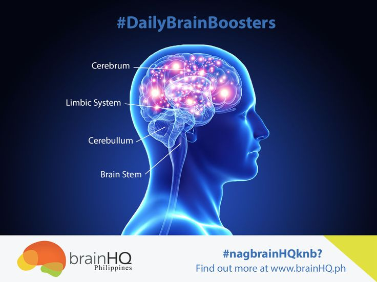 the most important functions of the human brain The key to learning is the brain's ability to convert a current experience into code   of the brain, the frontal lobes also house the most fragile parts of our identity,.