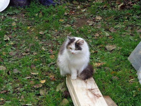 Кошка Муська услышала лай собаки.Cat Musica heard a dog barking.